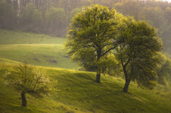 Meadow in spring with trees in bloom Stock Photos