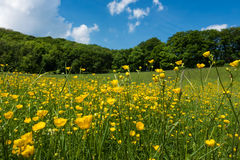 Meadow In Spring Stock Photo