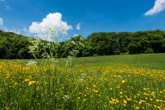 Meadow In Spring Stock Images