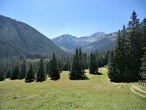 Meadow and spruce trees in the Tatra Mountains near Zakopane, Poland Royalty Free Stock Photos