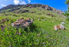 Meadow stones rocks Stock Photo