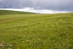 Meadow with storm clouds Royalty Free Stock Photos