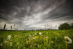 Meadow before a storm Stock Images