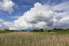 Meadow in the storm summer country Landscape Royalty Free Stock Photo