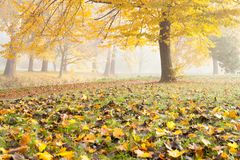 Meadow strewn with leaves and trees Stock Images