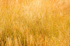 Meadow in summer. Royalty Free Stock Image