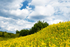 Meadow of summer flowers with cloudy sky Royalty Free Stock Photography