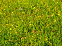 Meadow Royalty Free Stock Images