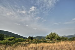 Meadow in summer, Pyrenees Stock Photo