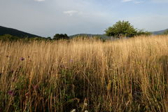 Meadow in summer, Pyrenees Royalty Free Stock Photo