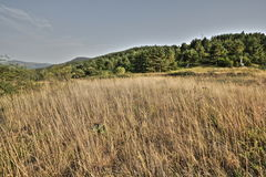 Meadow in summer, Pyrenees Royalty Free Stock Photography