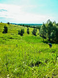 Meadow. Summer meadow under the sky royalty free stock photo