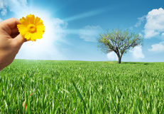 Meadow with a sun Royalty Free Stock Images