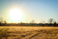 Meadow and sun. Beautiful yellow meadow and sun set Stock Images