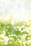 Meadow with sunlight Stock Photography