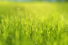 Meadow in sunlight Royalty Free Stock Photos