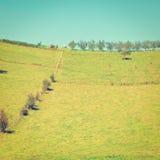 Meadow Stock Photos