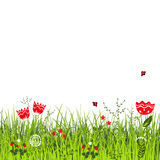 Meadow in sunny summer day. Ladybirds flying above the grass with flowers. Vector illustration Stock Photo