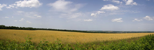 Meadow on a Sunny summer day. Stitched Panorama Royalty Free Stock Images