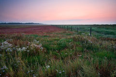 Meadow at sunrise Stock Image