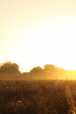 Meadow at sunrise Royalty Free Stock Image