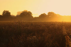 Meadow at sunrise Royalty Free Stock Photos