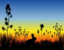 Meadow_sunset Royalty Free Stock Images
