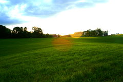 Meadow at Sunset Royalty Free Stock Photos