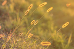 Meadow at sunset in autumn. Golden sunlight. Royalty Free Stock Photography