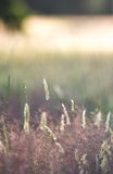 Meadow at Sunset stock images
