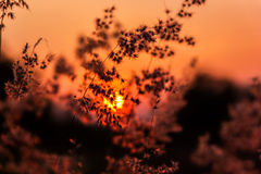 Meadow and sunset. Landscape shot Meadow and sunset Stock Image