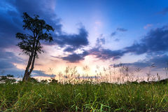 Meadow at sunset Royalty Free Stock Photo