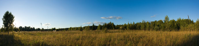 Meadow in sunset light panorama Royalty Free Stock Photography