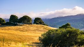 Meadow in the sunset light, south of Point Reyes National Seashore, California stock photography