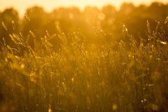 Meadow with sunset. Peacfull meadow with sunset in the afternoon Royalty Free Stock Photo