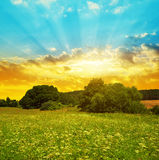 Meadow at sunset. Stock Photography