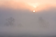Meadow at sunset with sun and mist Royalty Free Stock Photos
