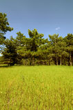 Meadow surrounded by trees Stock Photography