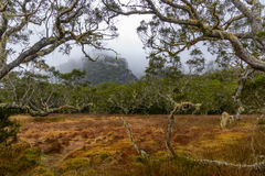 Meadow and tamarind forest in the cirque of Mafate, Reunion stock image