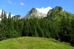 A meadow in Tatra Mountains. It is a mount called Giewont, one of the most popular but dangerous mount in Tatra Mountains Stock Image