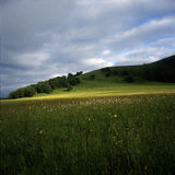 Meadow before thunder storm. This is a far-flung meadow with beatiful flower.Thunder storm is coming soon Stock Photo