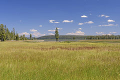 Meadow to Lakeshore in the Wilds Royalty Free Stock Photography