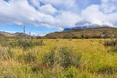 Meadow, Torres del Paine National Park, Chile. Mountains in the back in the Torres del Paine National Park, Patagonia, Chile stock images