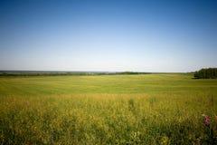 meadow trawy Zdjęcie Royalty Free