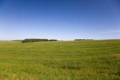 meadow trawy Obraz Stock