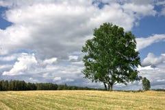 Meadow tree Royalty Free Stock Photo