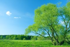 Meadow and tree Royalty Free Stock Image