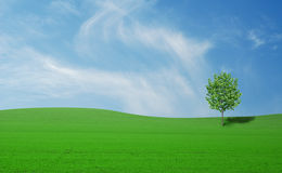 Meadow with tree Royalty Free Stock Images