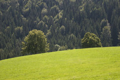 Meadow tree and forest Royalty Free Stock Images