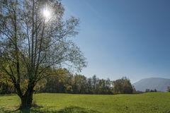 Meadow with tree and green grass. With blue sky in the background Stock Photos